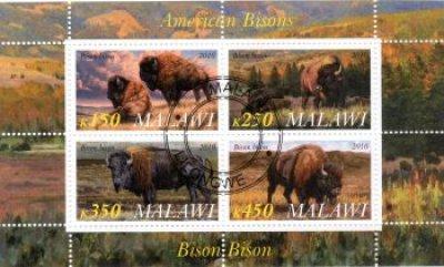 obrázok k predmetu FAUNA - MALAWI - BIZ