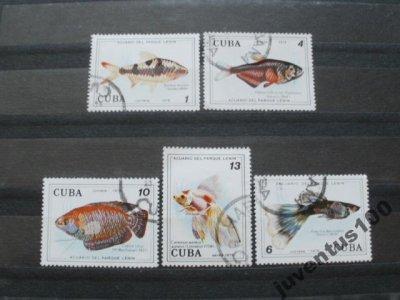 obrázok k predmetu Cuba ryby 5 kusov!!!