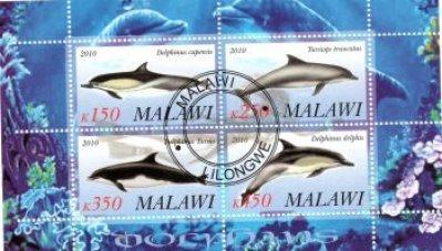 obrázok k predmetu FAUNA - MALAWI - RYB