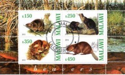obrázok k predmetu FAUNA - MALAWI - BOB