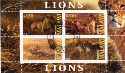 obrázok k predmetu FAUNA - MALAWI - LEV