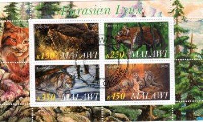 obrázok k predmetu FAUNA - MALAWI - RYS
