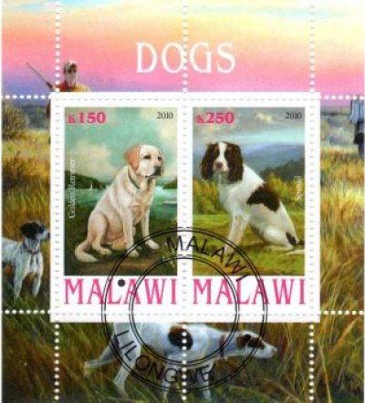 obrázok k predmetu FAUNA - MALAWI - PES