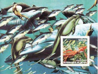 obrázok k predmetu Benin, fauna-ryby