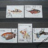 náhľad k tovaru Cuba ryby 5 kusov!!!