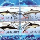 zberateľský predmet FAUNA - MALAWI - RYB  vyrobil borivoj