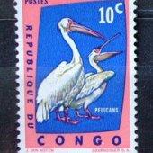tovar Kongo vtaky  vyrobil svatopluk