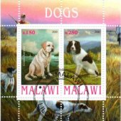 predmet FAUNA - MALAWI - PES  od svatopluk