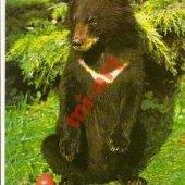 tovar Medveď, ZOO Dvúr Krá  vyrobil korvin